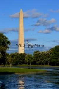 DC.watermark