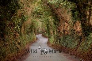 IRELAND.watermark